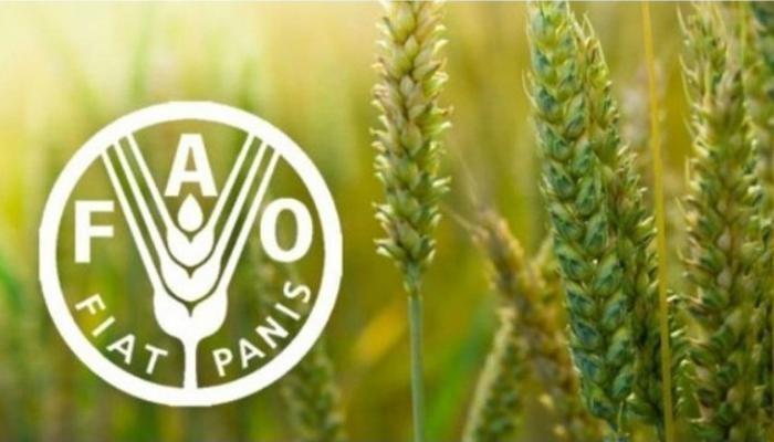 شعار منظمة الفاو